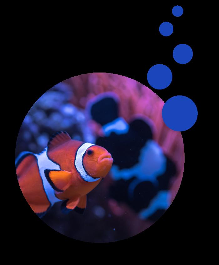 Custom Aquarium Deisgn